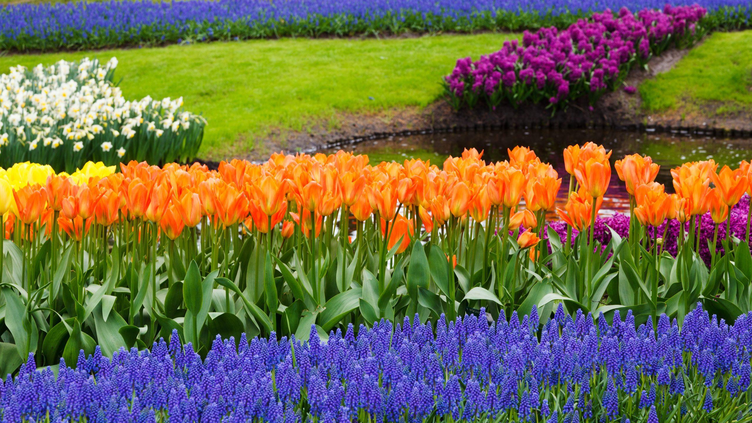Клумба из тюльпанов своими руками на даче фото 38