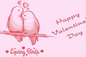 Loving Bird Valentines Day HD Image