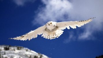 White Kite in Sky at Snowy Weather