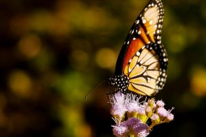 Butterfly Flower View Nice