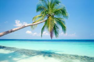 Tropical Island HD Wallpaper For Free
