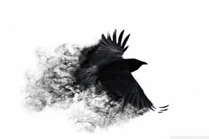 Minimalistic Crows White Background Neat Image For Free