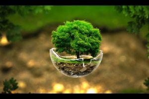Trees Trees Creative Nature Green
