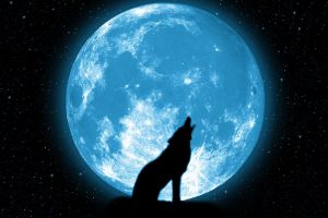 Wolf Howling Stars Beautiful Silhouette Space Sky