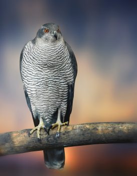 Owl Nice Nature Love