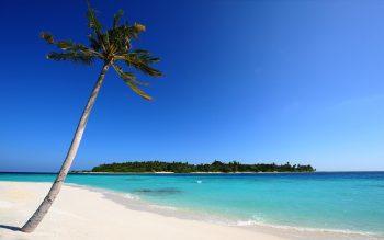 Beautiful Amazing Maldive Beach and Coconut Tree HD Nature Wallpaper