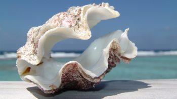 Beautiful Sea Shell on Beach HD Wallpaper