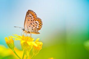 Butterfly Best