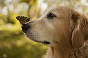 Butterfly on Dog Nose
