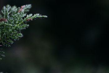 Christmas Tree Decor Free