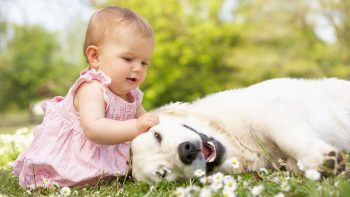 Cute Baby Playing With Dog in Garden HD