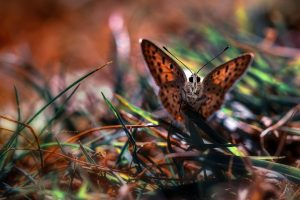 Cute Butterfly on Grass