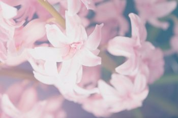 Flower Nature Love