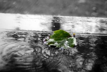 Green Leaf In The Rain
