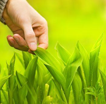 Human Hand Touching Green Grass