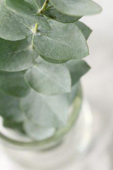 Leaf Medicine