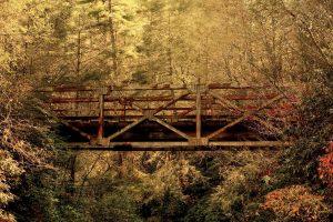 Old Bridge in Jungle