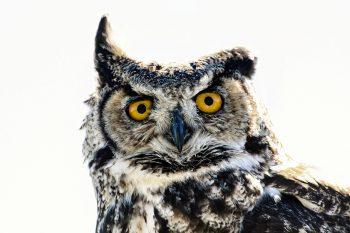 Owl Bird HD Photo