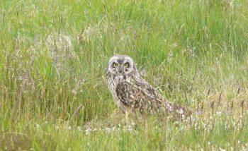 Owl at Bird Sanctuary Photo