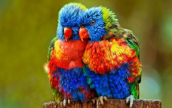Parrot Child HD Photo