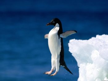 Penguin Jump in Water Photo