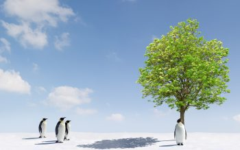 Penguin Standing Near Tree Photo