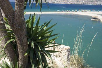 Plant Tree And Beach