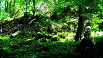 Plant Tree Land Stone