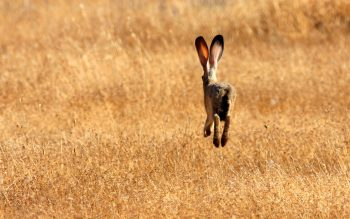 Rabbit Running Fast Photo