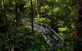 Daintree Rainforest in Queensland Australia Nature Wallpaper