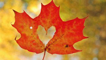 Love Heart Maple Leaf