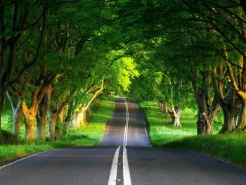 Road Between Nature View