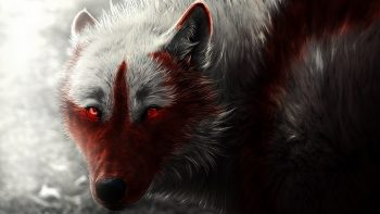 Scary Wolf HD Image