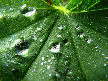Water Drops on Leaf 3D Pic