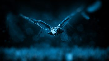 Night Owl HD Wallpapers For Android