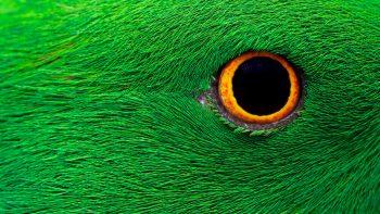 Parrot Eye HD 5K