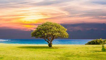 Tree Grass Beach Ocean Landscape 5K
