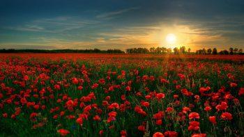 Red Flower Garden