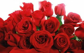 Red Valentine Roses