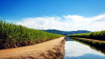 Sugarcane Fields 3D HD Wallpaper Download Wallpapers
