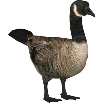 Baby Goose Clipart  3D PNG Image HD Wallpapers Download For Android Mobile