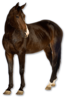Black Horse Standing PNG Image HD Wallpaper Download For Android Mobile Wallpapers HD For I Phone Six Free Download