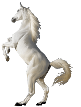 3D White Horse Standing HD Wallpapers Download For Android Mobile