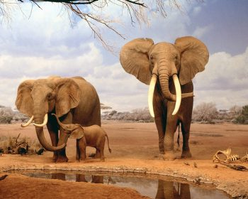 Are We There Yet Elephants