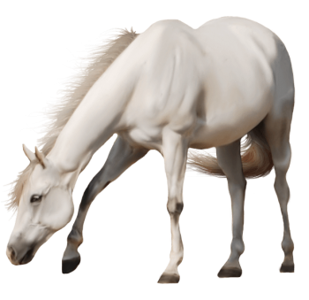 Brown Horse Png Image Download Picture Transparent Background