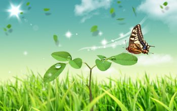 Butterfly World Download Full HD Wallpaper
