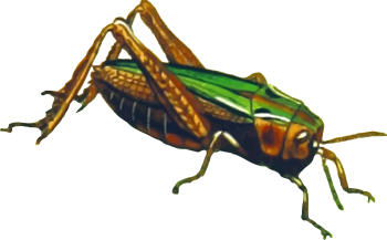 Colorful  Grasshopper PNG HD Image HD Wallpapers Download For Android Mobile