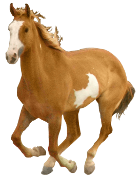 Running Horse PNG image HD Wallpaper Download For Android Mobile Wallpapers HD For I Phone Six Free Download