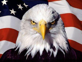 Eagle Bird On Flag
