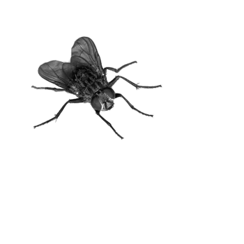 Small Fly PNG Image HD Wallpapers For Android